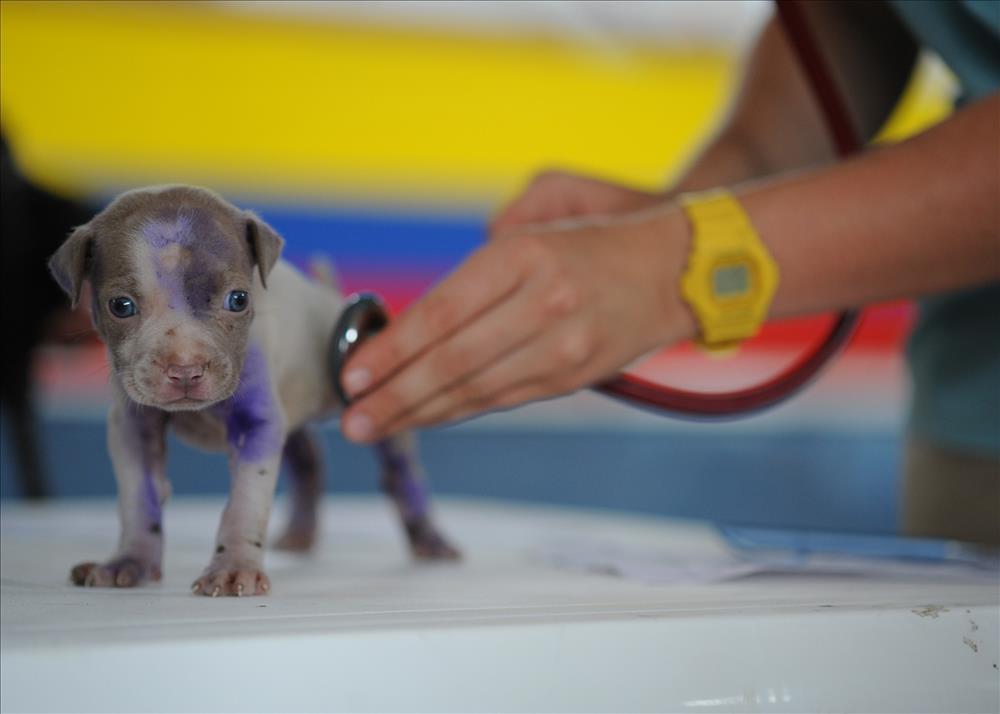 ZooVET-Software_blog_gestión_integral_clinica_veterinaria_clientes