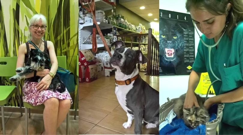 zoosalut_clinica_veterinaria_club_zoovet