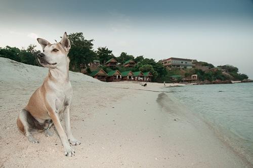 playa trabajo remoto